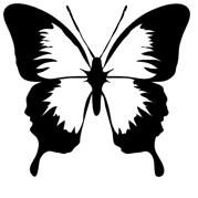 OMM-butterfly